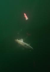 Фотографии с рыбалок
