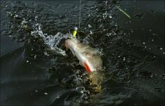 Фото с рыбалок (лето)