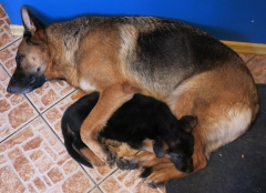 Мама с сынком