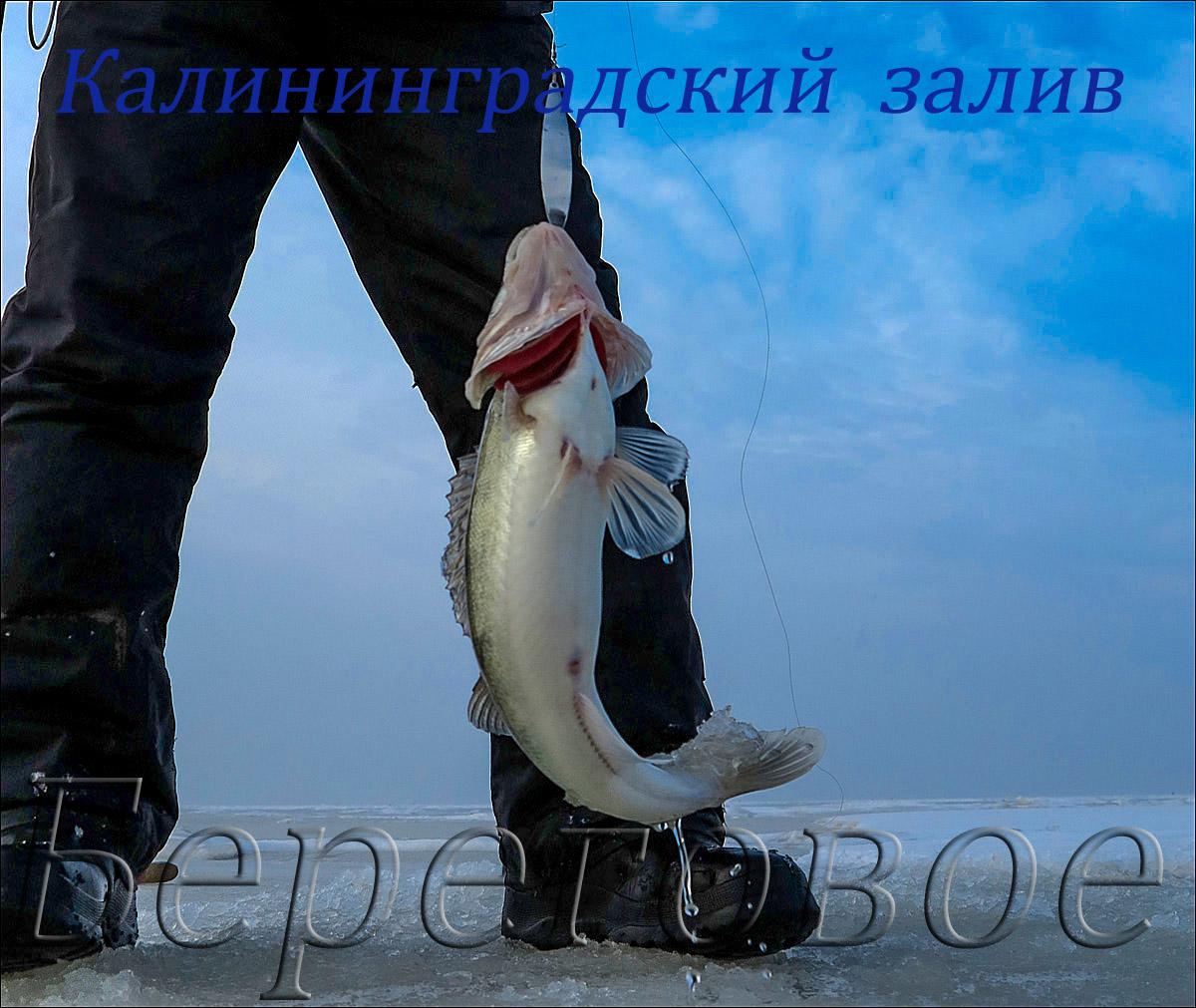 Калининградский залив 2014.