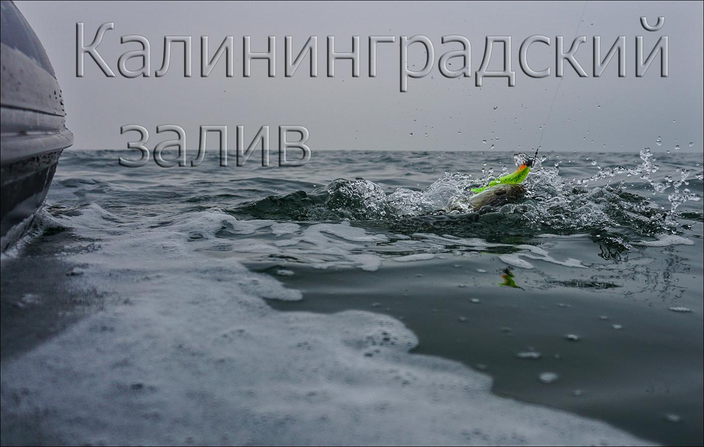 Калининградский залив (ноябрь).